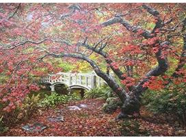 金明国(一级画家)《霜叶红于二月花》 115x74